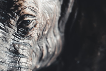 Foto op Canvas Olifant elephant toy close up