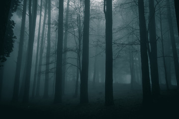Fotobehang Bossen very mysterious and desolate atmosphere on a gloomy day in the woods with thick fog