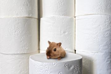 Hamster hamstert Klopapier
