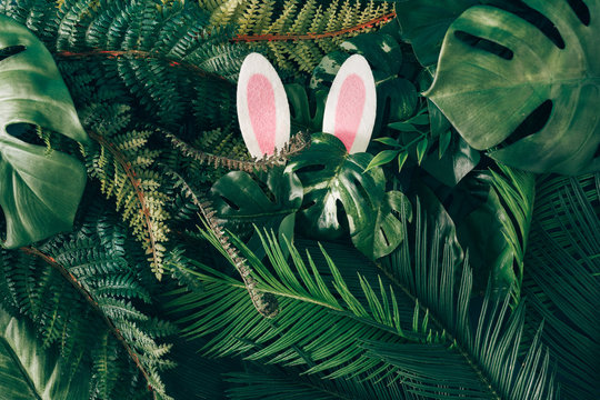 Creative Easter nature background. Green tropical palm leaves with pink Easter bunny ears. Minimal spring abstract jungle or forest composition. Contemporary style.