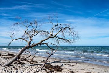 Fototapete - Baumstamm am Weststrand auf dem Fischland-Darß