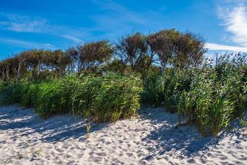 Fototapete - Der Weststrand auf dem Fischland-Darß