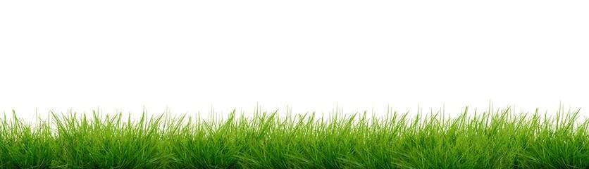 Banner - Gras Fototapete