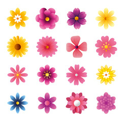 set of cute flowers naturals in white background vector illustration design