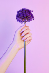 Caucasian woman's hand holding violet flower