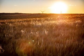 Wind Turbines in field against sunset sky