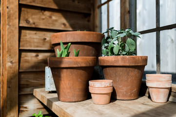 Potted Plants in Greenhouse In Waco Texas