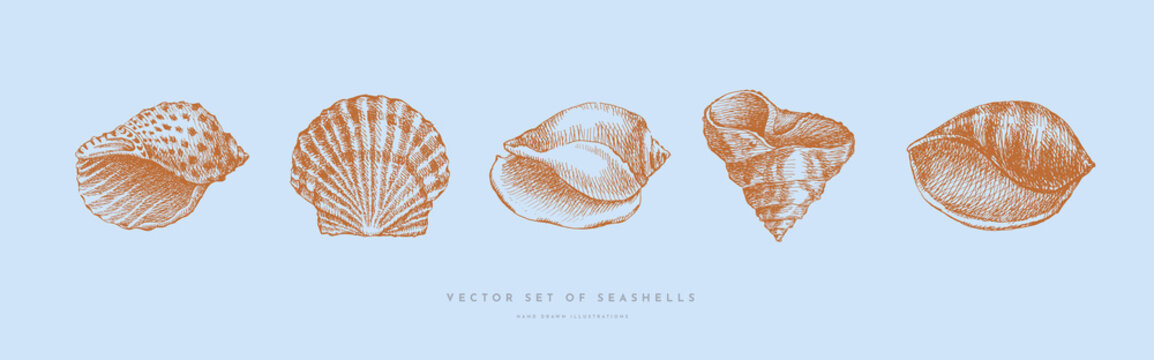 Collection of hand-drawn realistic seashells. Shells of mollusks of various forms: spirals, cone, scallops on blue background. Oceans nature in vintage style. Vector illustration of engraved lines.
