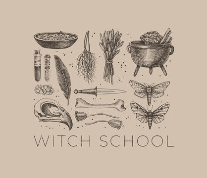 Monochrome set of mystical items for witchcraft. Elements of witch or wizard set: bird skull, test tubes with a potion, bone, herbs, dried insects, bowler, knife. Magic illustration. Pagan traditions.