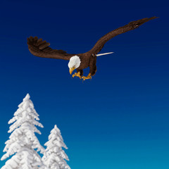 Fototapete - bald eagle is diving on white snow