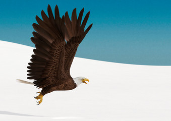 Fototapete - bald eagle is flying up on white snow side view