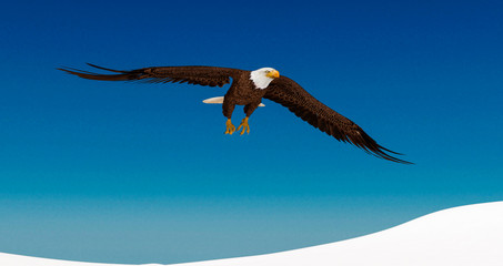 Fototapete - bald eagle is passing by on white snow