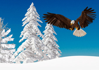 Fototapete - bald eagle in action on white snow side view with copy space