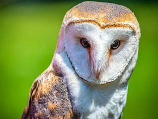 Zelfklevend Fotobehang Uil Closeup shot of a cute barn owl with a colorful blurry background