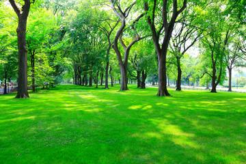 公園 セントラルパーク Fotobehang