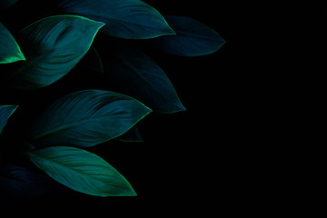 Fotomurales - abstract green leaf texture, dark blue tone nature background, tropical leaf