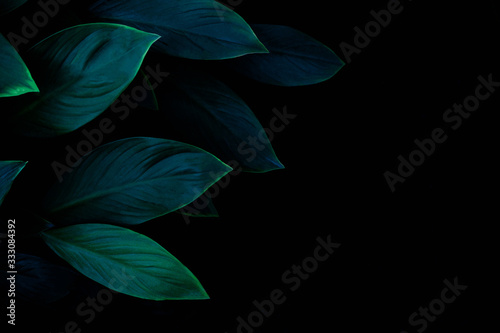 Wall mural abstract green leaf texture, dark blue tone nature background, tropical leaf
