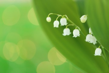 Foto op Canvas Lelietje van dalen Lily of the valley flower with green leaves on a light green background. Soft blurry focus.Floral tender spring background.Spring flowers. copy space. Flower card