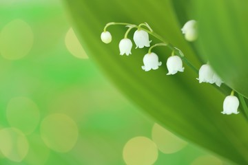 Fotorolgordijn Lelietje van dalen Lily of the valley with green leaves on a light green background. Soft blurry focus.Floral tender spring background.Spring flowers. copy space. Flower card