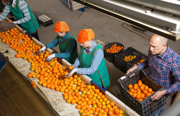 Cheery male and female workers sorting mandarins
