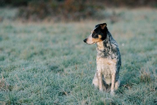 Hund Morgennebel Wiese