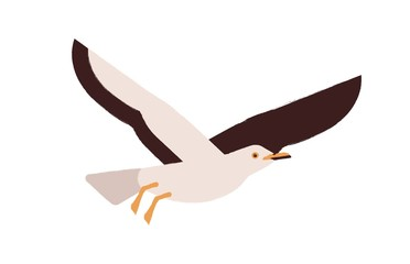 Cartoon atlantic seabird flying isolated on white background. Colored cute seagull vector flat illustration. Beautiful marine bird enjoying freedom. Adorable winged creature. Colorful wild gull Fototapete