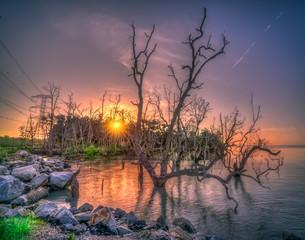 Fotobehang Lavendel beautiful mangrove beach