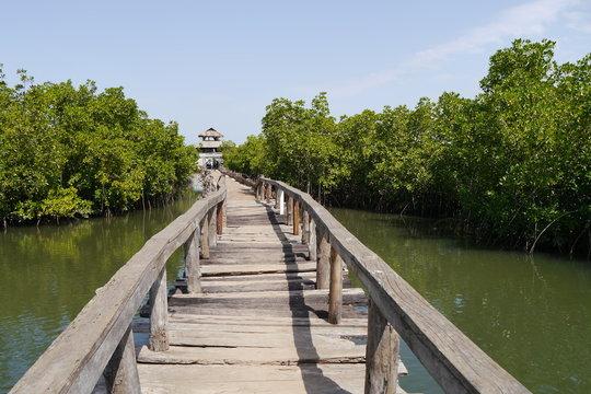 Steg durch Mangrovenwald