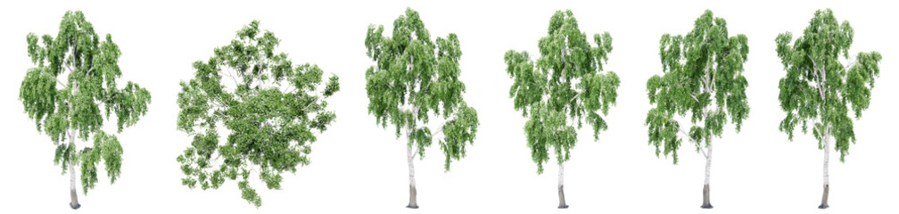 Foto auf Leinwand Olivgrun Set or collection of green birch trees isolated on white background. Concept or conceptual 3d illustration for nature, ecology and conservation, strength and endurance, force and life
