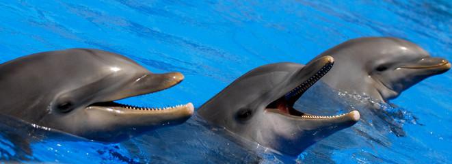 Three Happy Dolphins