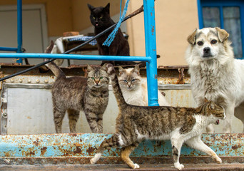 Keuken foto achterwand Marokko Cats on a boat in the Danube Delta
