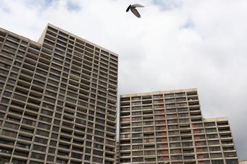 A bird flies over buildings where people stay home, amid fear of coronavirus disease (COVID-19), in Tehran