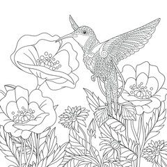 Coloring page. Beautiful hummingbird and poppy flowers.