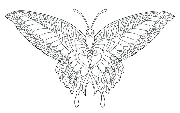Coloring page. Beautiful butterfly insect.