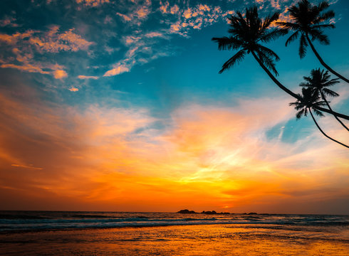 palms and hot tropical sunset