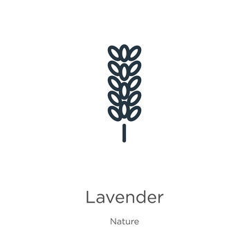Lavender icon. Thin linear lavender outline icon isolated on white background from nature collection. Line vector sign, symbol for web and mobile