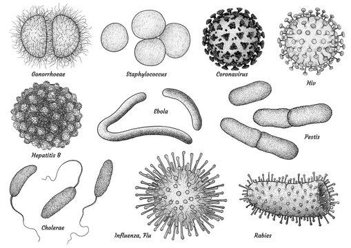 infectious bacteria and virus collection illustration, drawing, engraving, ink, line art, vector