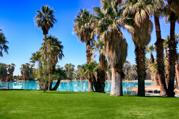 Blue water, green grass and palm trees at Agua Caliente Park, an oasis in the Arizonan desert NE of Tucson