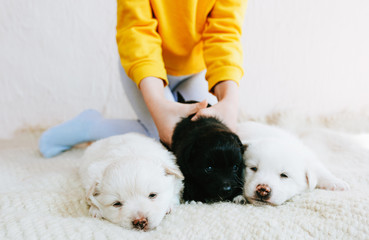 Cropped image of child playing at home with little dogs. Little girl cares about the puppies. Adorable kid playing with her pets at the carpet in the room. Adoption of animal shelter concept.