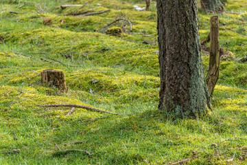Grüner Waldboden mit Baumstamm und Stumpf