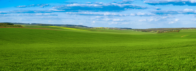 Wall Mural - panoramic view of green field wheat with cloudy sky