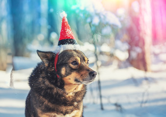 Dog wearing Santa hat outdoor in a snowy forest
