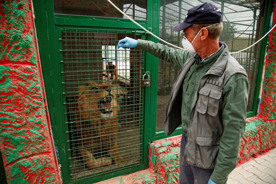Jamal Yusuf Ali, a zoo keeper who volunteered to stay with animals, wears a protective face mask and gloves, as he stands next to a lion, during a curfew which was imposed to prevent the spread of the coronavirus disease (COVID-19), in Erbil