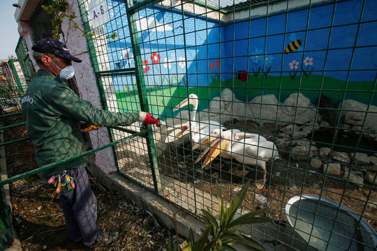 Jamal Yusuf Ali, a zoo keeper who volunteered to stay with animals, wearing a protective face mask, feeds the geese, during a curfew which was imposed to prevent the spread of the coronavirus disease (COVID-19), in Erbil