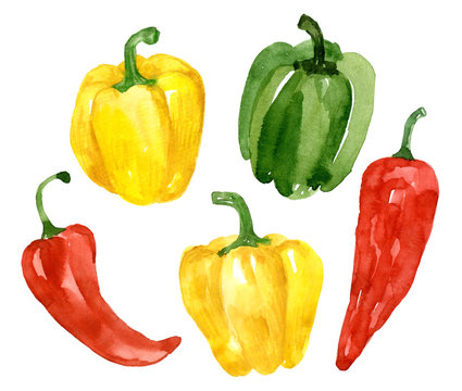 Watercolor collection of yellow pepper. Hand drawn elements isolated on white background. Set of bright fresh vegetable.