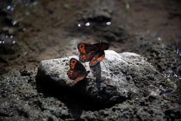 farfalle rossa e nera su una pietra illuminata