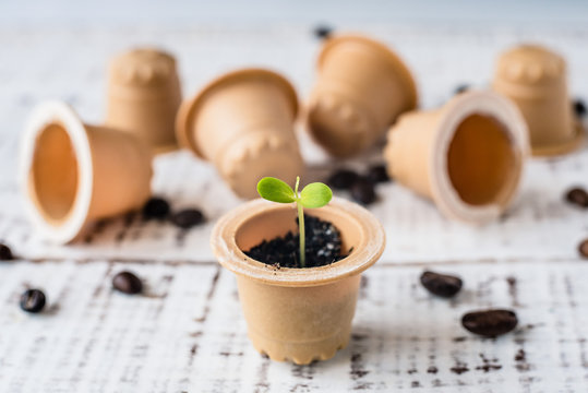 Plant sprout in used composted coffee capsule. Espresso coffee Capsules from wood in the box. BIO coffee, compostable capsules. recycling and zero waste concept