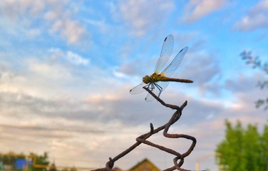 dragonfly on blue sky background