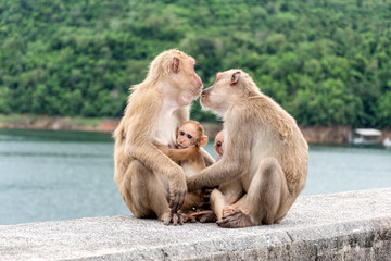 Monkey parents, monkey mothers and baby monkeys live together as a family.