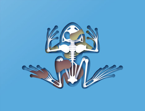 Paper cut frog skeleton x ray with toxic pollution